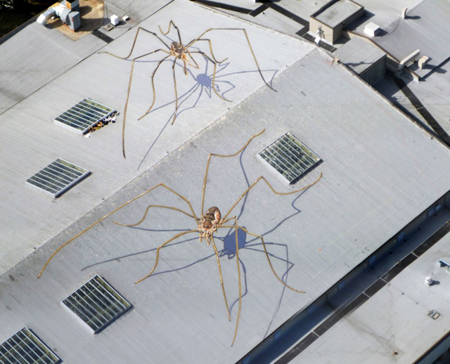 Large spiders mural