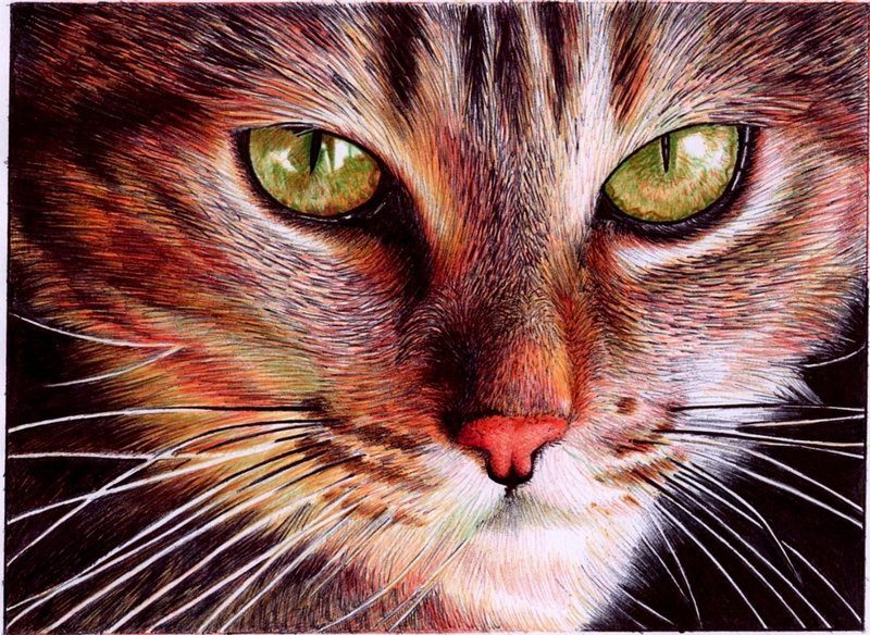 Bic pen drawing of a cat