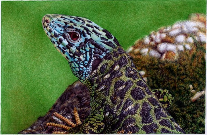 Bic pen drawing of a lizard