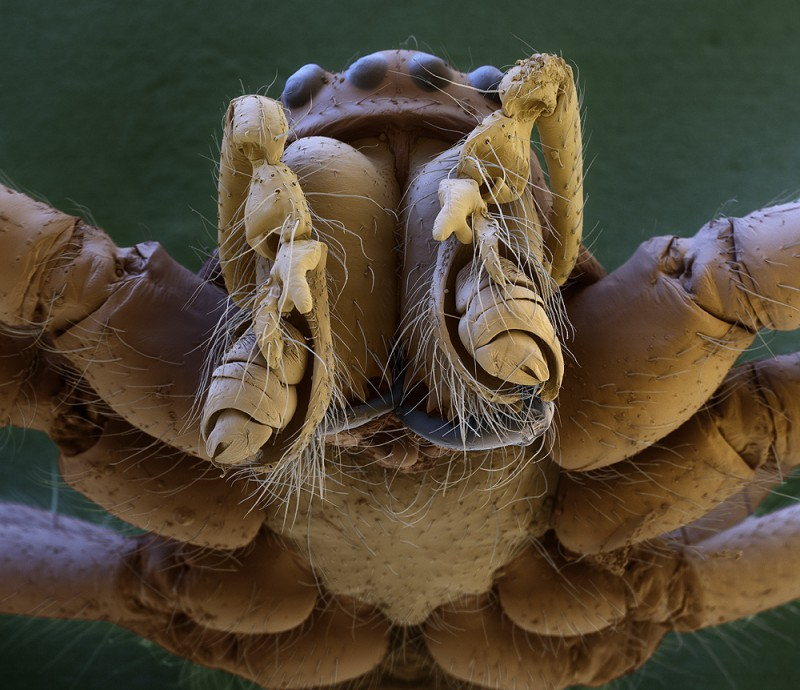 Spider's head magnified