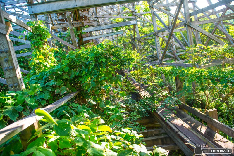 Abandoned rollercoaster overgrown with ivy