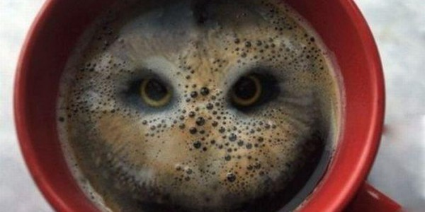 Owl in a mug of coffee