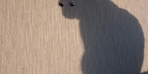 Two buttons stuck on a wall on a cat's shadow to look like eyes