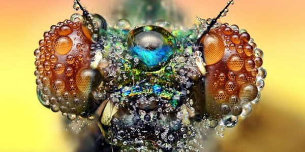 Close-up photo of a dragonfly's face covered in dew