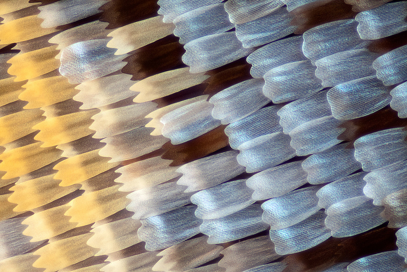 Macro photo of butterfly wing scales