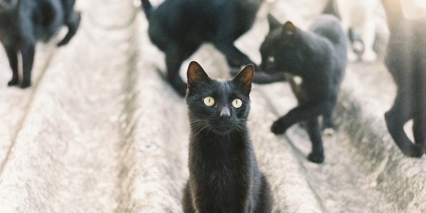Gang of black cats