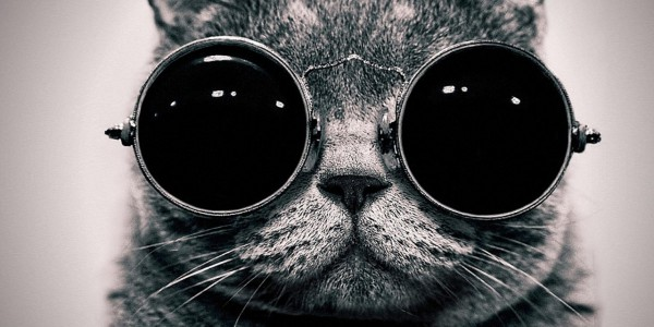 Cat wearing round dark glasses