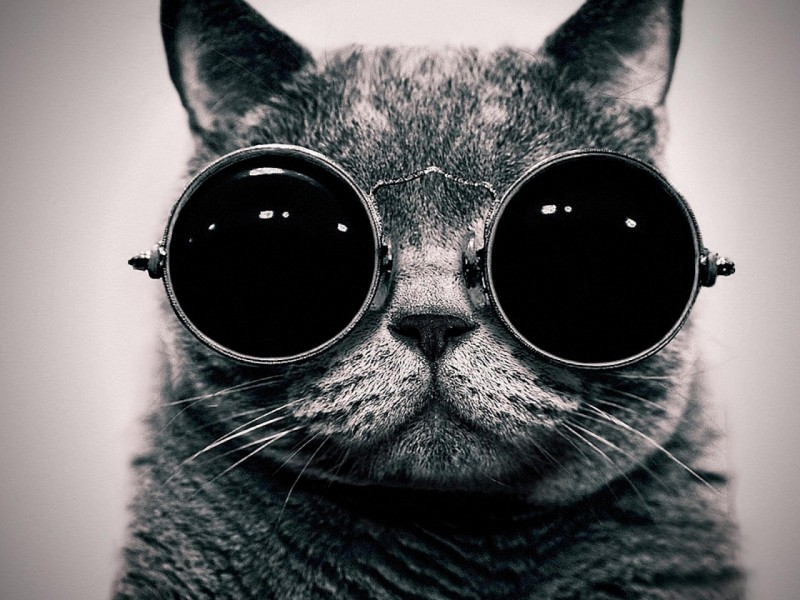 5421bdf1753 Cat wearing round dark glasses