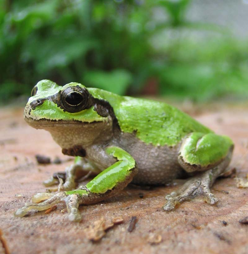 Unknown Species Of Frog