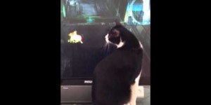 Cat As Boss Fight