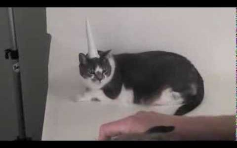 Behind The Scenes Of The Inflatable Unicorn Horn For Cats Photoshoot
