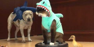 Vaccum Riding Cat In Shark Suit Chasing Duckling