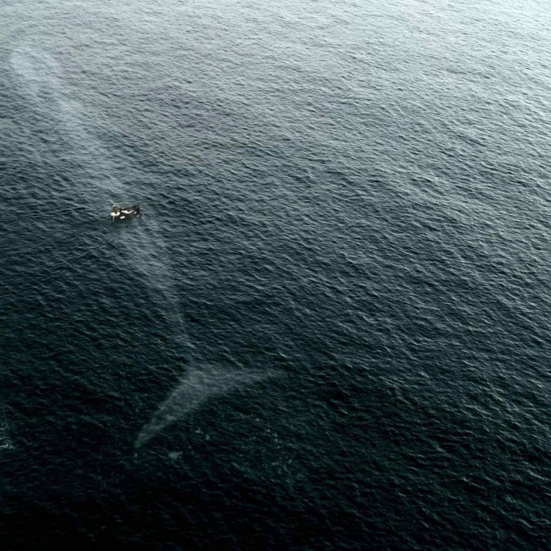aerial photo of a large whale