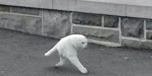 Half a cat on Google Street View